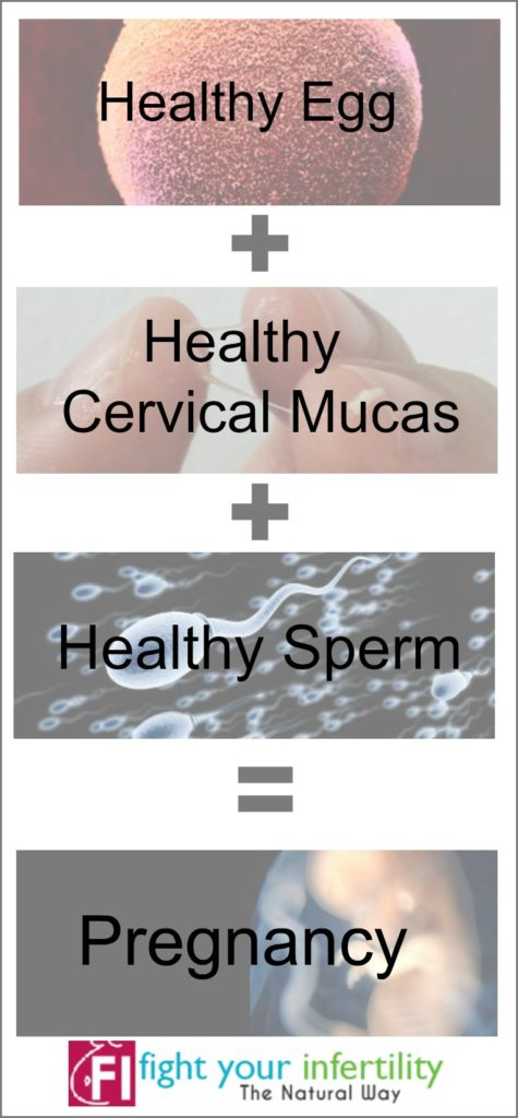 the formula for conception